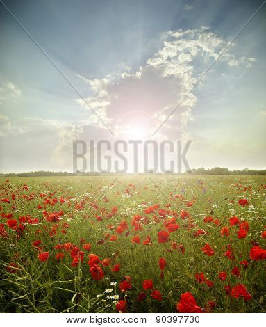 landscape poppy flowers in the sky