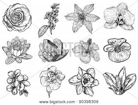 Vector illustration of flowers in sketch style (black and white)