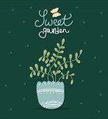picture of loach  - flower in a pot - JPG