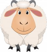 foto of baby sheep  - Vector illustration - JPG