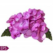 stock photo of  realistic  - Vector blue realistic hydrangea - JPG