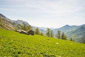stock photo of italian alps  - Alpine pasture and shepherd - JPG