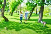 image of dog park  - Young couple walking the dog in the park - JPG