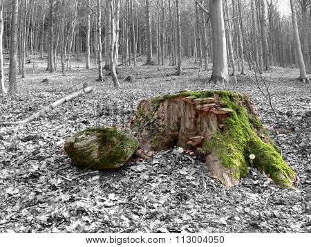 Color Stump With Green Moss In Grey Forest