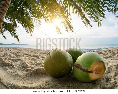 Coconuts on the tropical beach