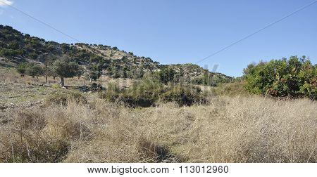 Garrigue Habitat
