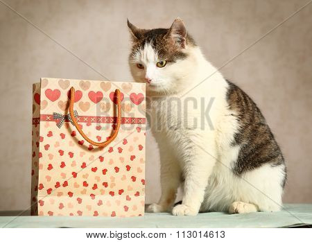 Siberian Male Cat With Present Bag Sniffing