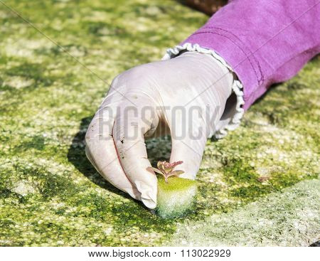 Farmers Planted An Organic Vegetable Plot