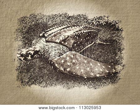 Artistic turtle paper illustration