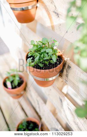 Gardening Plant Elements