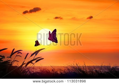 Silhouette Butterfly Flying Outdoor The Sunset.