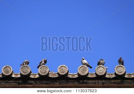 Pigoens On Japanese Temple Roof