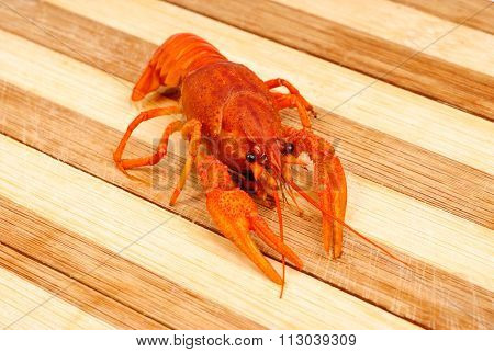 Boiled Red Cancer Close-up On Wooden Background