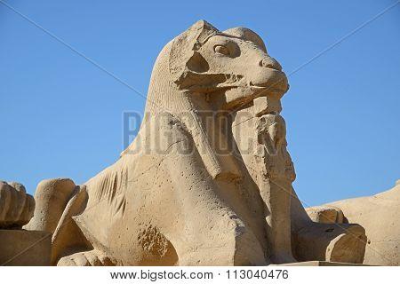 Karnak Sphinx Close-up