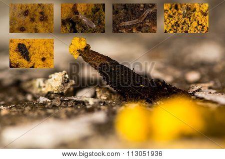 Fungal fauna composite