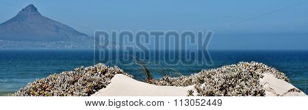 Beach With Lions Head