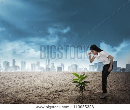 Asian Business Woman Looking Down The Plant Seed Grow On The Desert