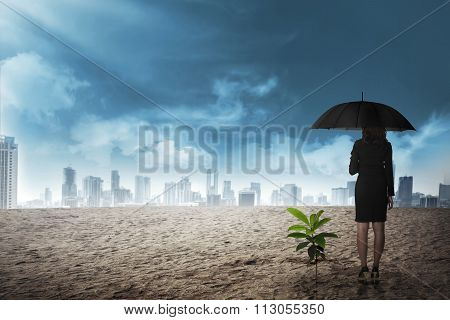 Asian Business Woman In Black Umbrella Stand Beside Plant Seed Grow On The Desert