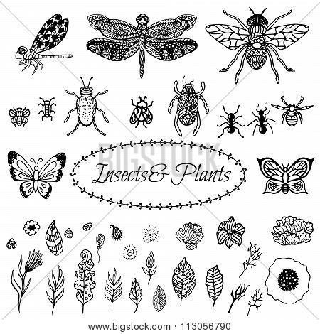 Hand drawn vector zentangle black plant leaves, flowers and insects set isolated on white.