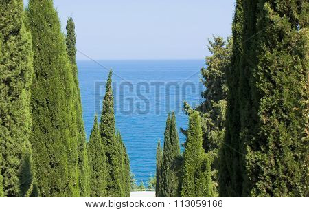 Sea With Cypresses