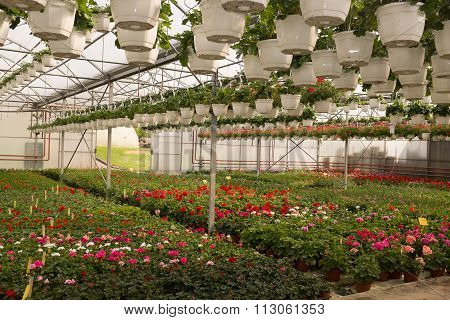 Interior View Of Garden Centre With Flowers