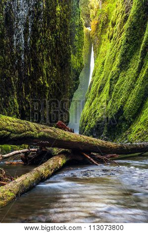 Oneonta Gorge Trail In Columbia River Gorge, Oregon