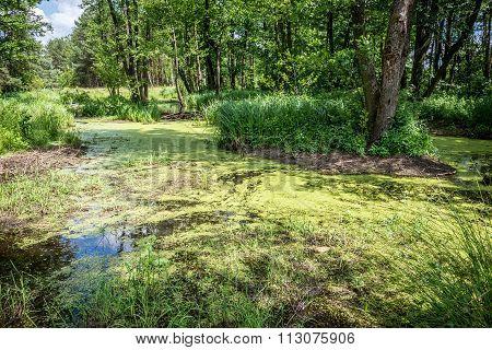 Pond In Poland