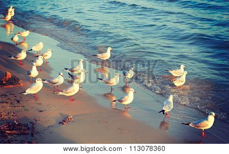 Birds Seagulls On The Shore