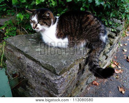 cat sat on a wall looking cute green bush