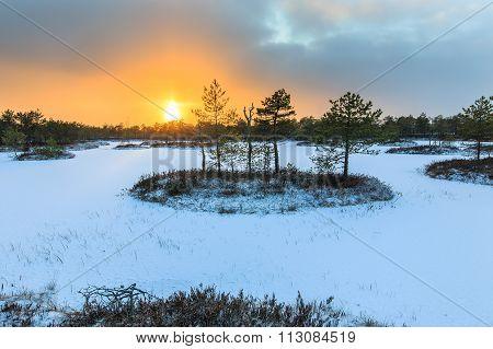 Sunset in winter bog