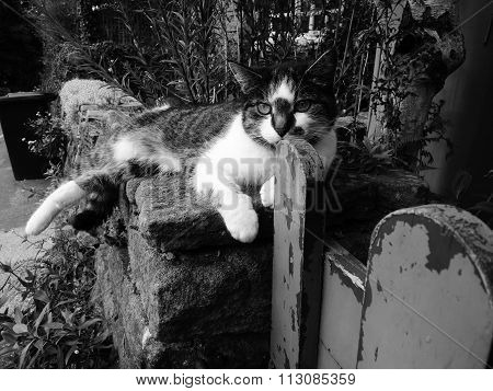 cat sitting on a dry stone wall with gate