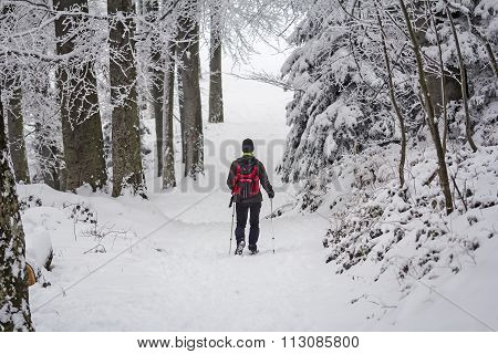 Mountaineer In The Snow Forest