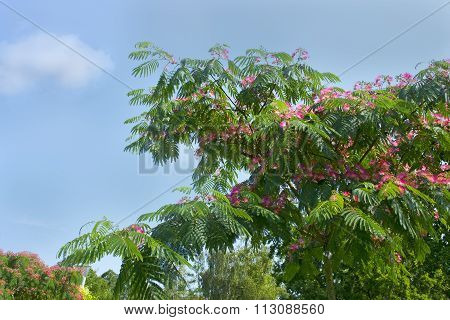 Beautiful Pink Flowers On The Tree