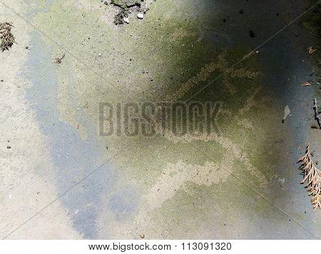 algae on concrete floor old green moss