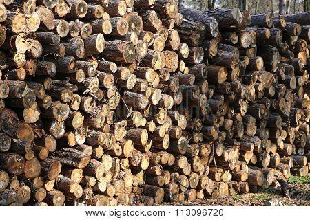 Woodpile Of Freshly Cut Lumber Awaiting Distribution