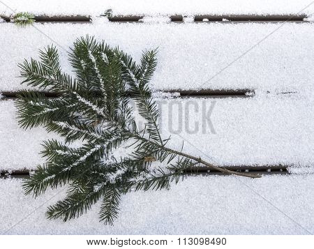 Douglas Fir Branch On Snow Facing Left