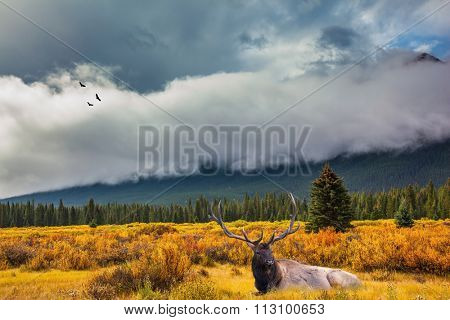 Wonderful antlered deer resting in the thick high grass. The lush colorful