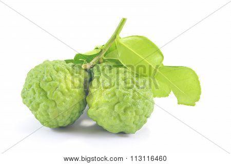 Kaffir Lime Citrus Hystrix