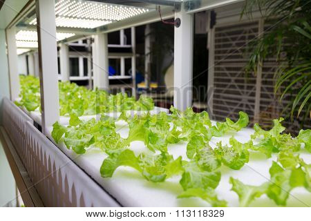 Hydroponic vegetable plantation system
