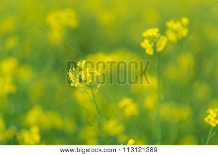 flowers reform