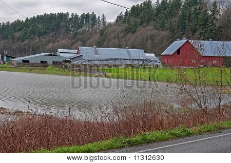 Stanwood, Wa - December 14: Flooded Dairy Farm
