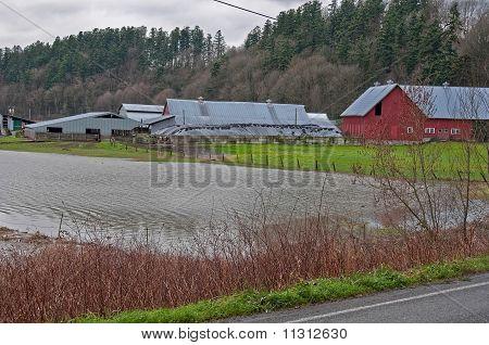 Stanwood, Wa - December 14: Flooded Dairy Farm