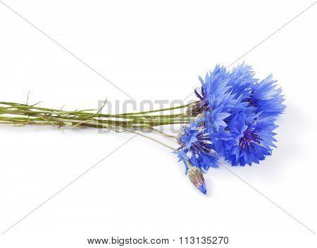 Blue Cornflower - Centaurea