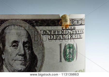 Macro Of Dollar Banknote Eaten By Worm, Inflation Concept
