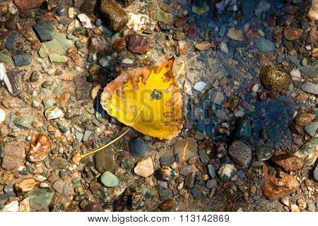 Yellow Leaf Lying On The Wet Ground Full Of Pebbles