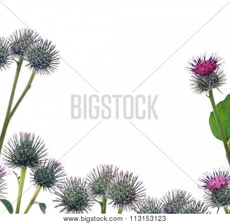 half frame from greater burdock flowers isolated on white background