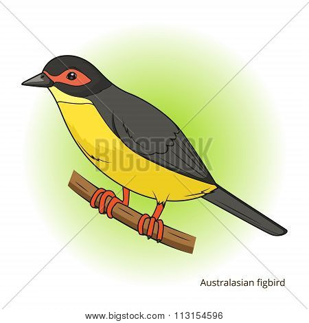 Australasian figbird bird educational game vector
