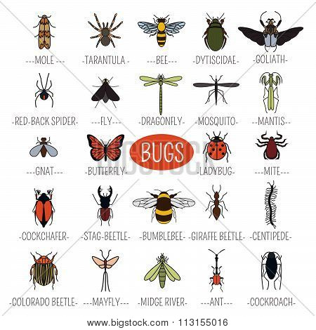 Insects icon flat style. 24 pieces in set.