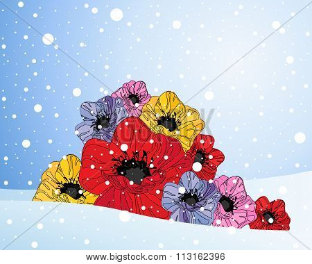 Poppies And Snow
