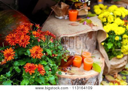 Composition of candles and chrysanthemums on wooden snags inside